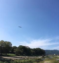 ウォーキング再開!!!  鴨川の「しらさぎを探せ」そして京都御所へ