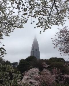 桜の枝の合間から見える都庁