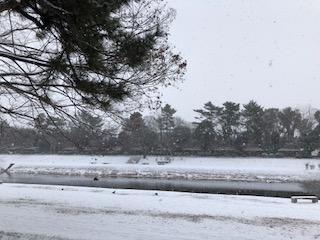京都も-3℃ 鴨川も雪化粧 ⛄