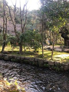 今朝は上賀茂神社へ行きました。